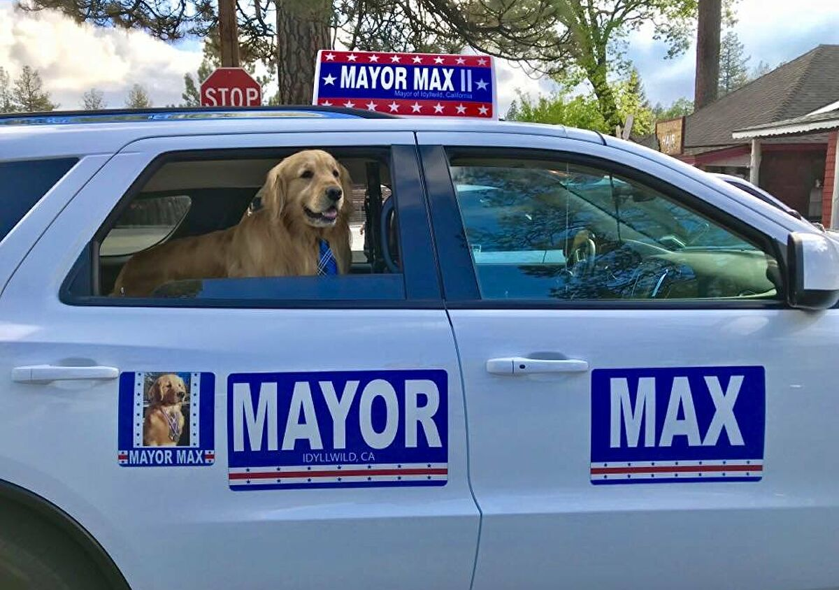 Mayor Max, Idyllwild California